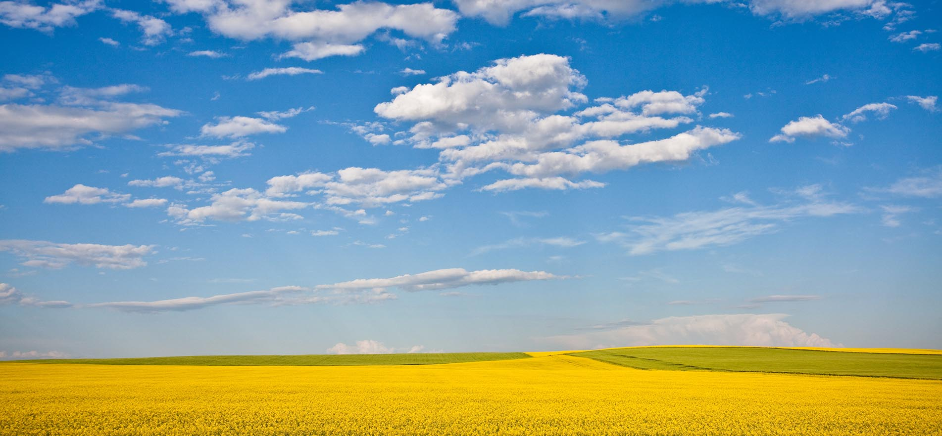 Large panoramic view of vast gold green grass fields underneath a rich marine blue sky.